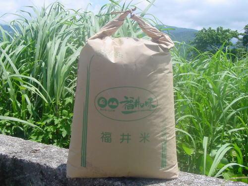 上庄里芋秀【50kg】土付き