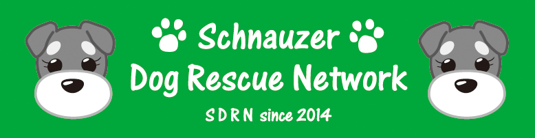 Schnauzer・Dog Rescue Network~SDRN~