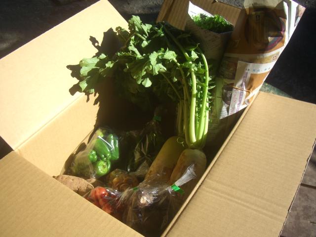 """<div>野菜3種前後のお試しサイズです。</div><div>ほかの商品と一緒に、野菜も少し食べてみたい!などの時にご利用ください。</div><div><br></div><div><span style=""""font-size: 10pt;"""">詳しくはこちらをご覧ください。>><a href=""""https://yoti36.wixsite.com/bigfamily/about"""">BIG FAMILYについ<span style=""""font-size: 10pt;"""">て</span></a></span></div><div><br></div><div>基本的にお任せセットになりますが、「サツマイモは一杯あるのでそれ以外で!」とか、「人参が入ってたらうれしいです♪」など、リクエストがあれば、お知らせしてみてください。</div><div><br></div><div><br></div><div><br></div><div><br></div><div><br></div>"""