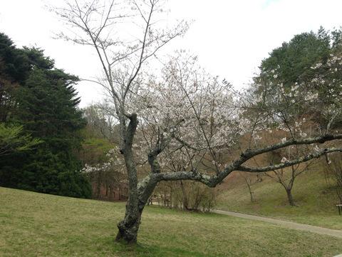 採取地: 兵庫県神戸市北区
