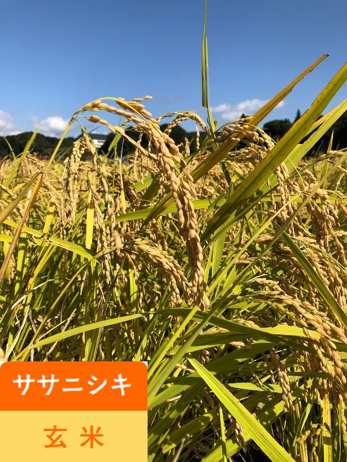 """<p><strong>&nbsp;<font color=""""#009900"""">高野ぼちぼち農園</font> 無肥料無農薬</strong><br></p>"""