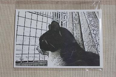 はちわれさん君の かわいい描画タッチのポストカードです。