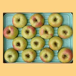 りんごぐんま名月贈答品5kg