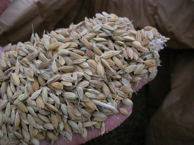 エサ用の地元(豊田市産)のお米