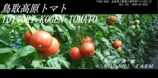 烏取高原トマト