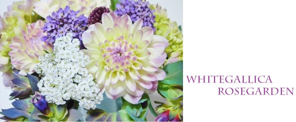 whitegallica rosegarden