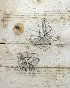 蝶SサイズとLサイズ比較