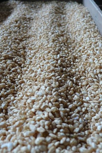 コシヒカリ米玄米糀