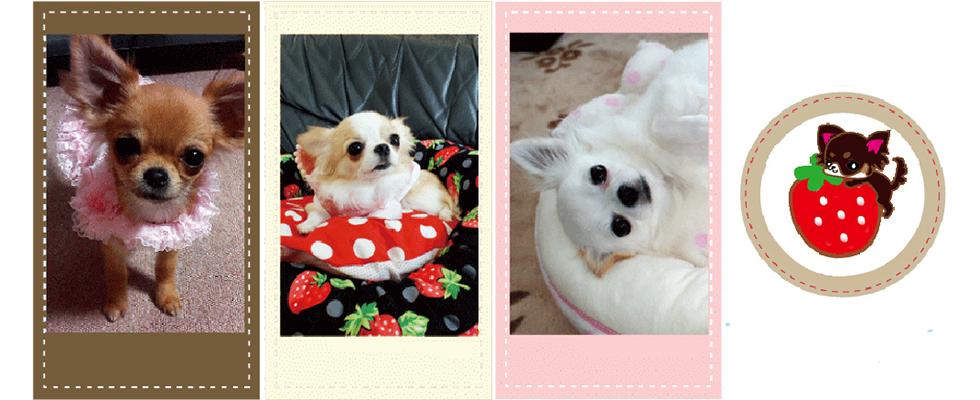 アトリエ BerryBerry/ハンドメイド犬服・ベッドetc