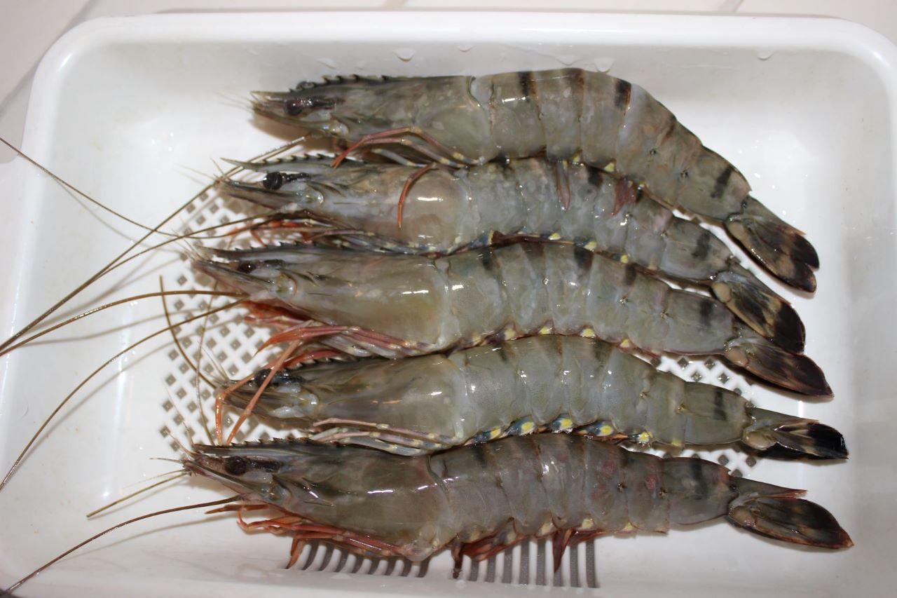 ベトナム産ブラックタイガーエビ解凍例