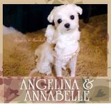 Angelina & Annabelle (Keiko's Maltese)
